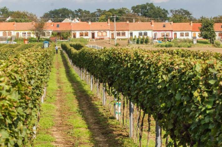 Moravské ochutnávání vín   Vinné sklepy  U Jeňoura